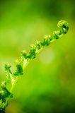Close up of curled fern  Stock Photos