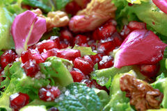 Close up of curly endive salad with pomegranate, nuts... Royalty Free Stock Image