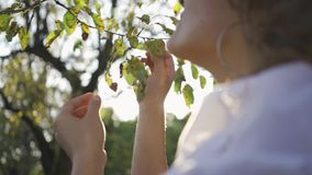 Young girl touching tree brunch in front of sun rays. The woman admiring sunset in the garden or park. Connection with stock footage