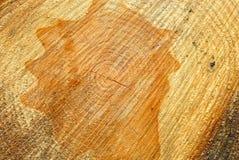 Close up of cut log Stock Image