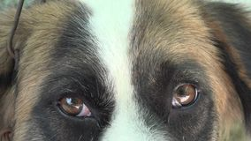 Close up of cut mutt dog pet stock footage