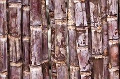 Close up of cut sugarcane Royalty Free Stock Image
