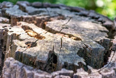 Close up of cut tree trunk in the forest Royalty Free Stock Photos