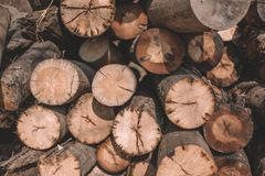 Close-up cut trees, log cabins, logs lie a bunch stock image
