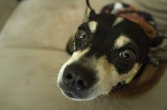 Close up of cute adorable dog stock photos