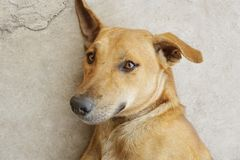 Cute brown dog on cement floor. Close up cute brown dog on cement floor royalty free stock image