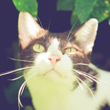 Close up of cute cat in garden with retro effect Royalty Free Stock Photos