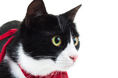 Close up of a cute cat wearing red scarf Stock Images