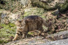 Cute friend cats in nature. Close up cute friend cats in nature royalty free stock photos