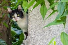 Cute friend cats in nature. Close up cute friend cats in nature stock photography