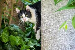 Cute friend cats in nature. Close up cute friend cats in nature stock photos