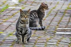 Cute friends cats on car in nature. Close up cute friends cats on car in nature royalty free stock image