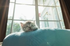 Cute kitten on bed Royalty Free Stock Photos