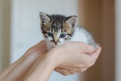 Close up of cute kitty in woman`s hands. stock image