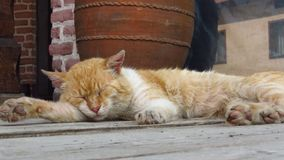 Close up of a cute lazy sleeping cat. Oh those lazy cats! Royalty Free Stock Photo