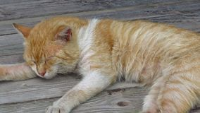 Close up of a cute lazy sleeping cat. Oh those lazy cats! Stock Image