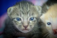 Cute little cat looking at camera. Close up cute  little cat looking at camera Royalty Free Stock Photo
