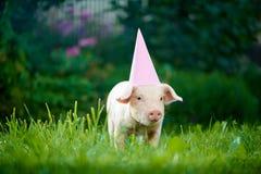 Little pink piggy standing in garden among green grass and posing at camera. stock photos