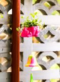 Closeup of cute pink flowerpot with green leaves stock image