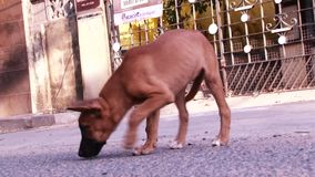 Close up cute puppy dog, street dog, dog playing in outdoor stock footage