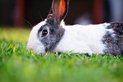 Close up of cute rabbit Stock Image