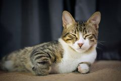 Close up of cute sleeping cat. Defocused, selective focus, blurred background royalty free stock photo