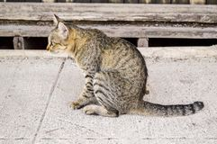 Cute tabby cat in country Thailand stock image