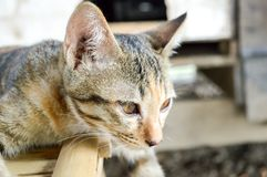 Cute tabby cat in country Thailand stock photos