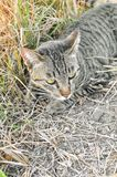 Cute tabby cat on the ground royalty free stock image