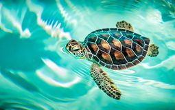 Close up of cute turtle stock photography