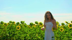 Close-up cute young woman with long brown hair and in white summer sundress walks on pictorial field with beautiful sunflowers stock footage