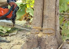 Close-up cutting tree with chainsaw.  stock image