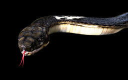 Close-Up Of 3d King cobra snake. Attack isolated on black background, cobra snake Stock Image