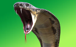 Close-Up Of 3d King cobra snake Stock Photo