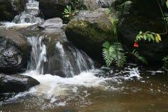 Close up da água que flui rapidamente sobre rochas com samambaias e flores em Otavalo Equador imagem de stock