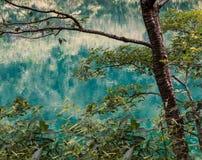 Close up da árvore com água azul brilhante fotos de stock