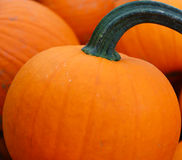 Close-up da abóbora em uma exploração agrícola Fotos de Stock