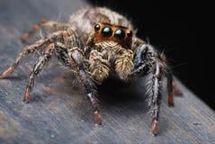 Close up da aranha Fotos de Stock Royalty Free
