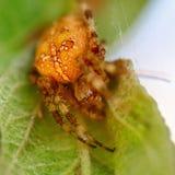 Close up da aranha fotos de stock