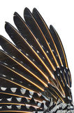 Close up da asa da parte superior do pássaro da cintilação fotos de stock royalty free