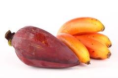 Close up da banana vermelha orgânica com flor Imagens de Stock