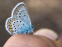 Close up da borboleta Foto de Stock