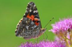 Close up da borboleta em uma flor fotos de stock