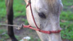 Close up da cabeça de cavalo branco bonita filme