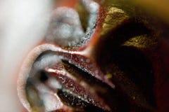 Close up da cara da Buda do pau-ferro preto Imagens de Stock Royalty Free