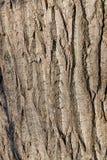 Close up da casca de árvore Fotografia de Stock Royalty Free