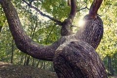 Close-up da casca de uma árvore Foto de Stock