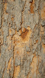 Close up da casca de uma árvore velha Foto de Stock Royalty Free