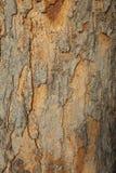 Close up da casca de uma árvore velha Fotografia de Stock