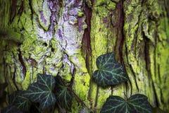 Close up da casca verde com folhas Fotografia de Stock
